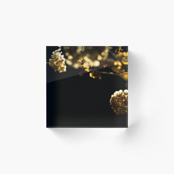 Flowers in the Night Acrylic Block