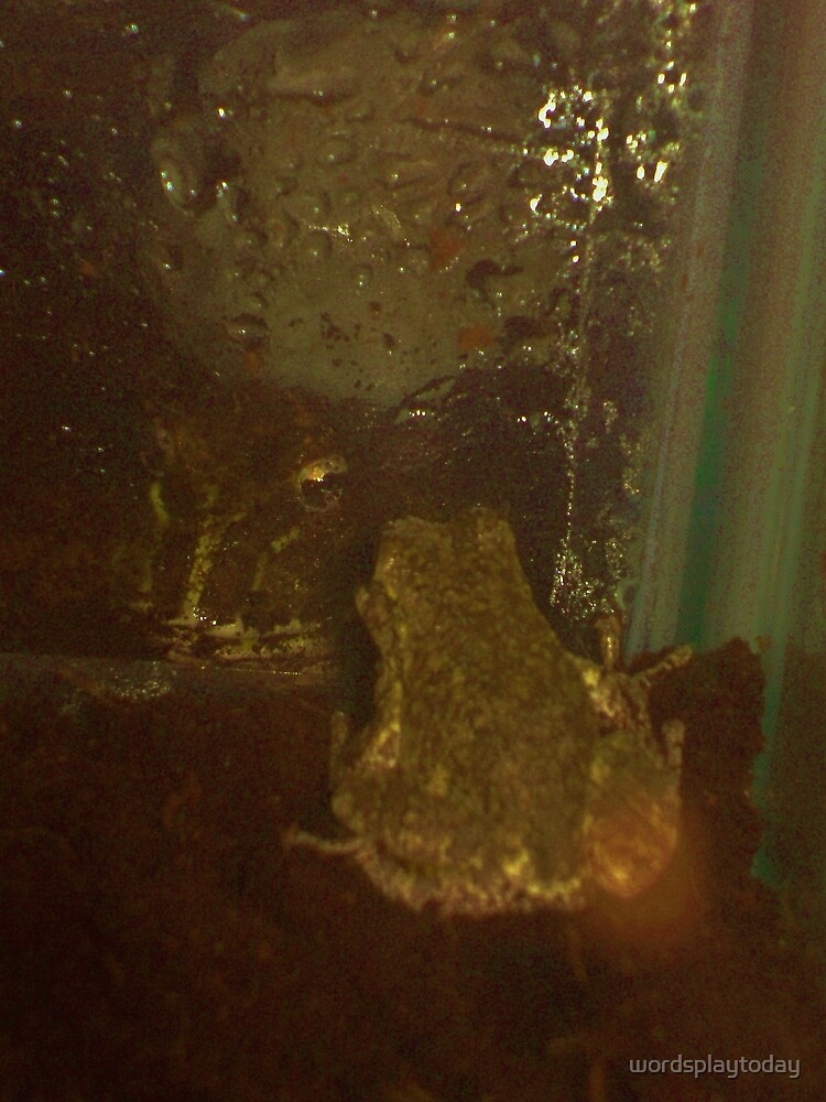 Two Frogs Meet by wordsplaytoday