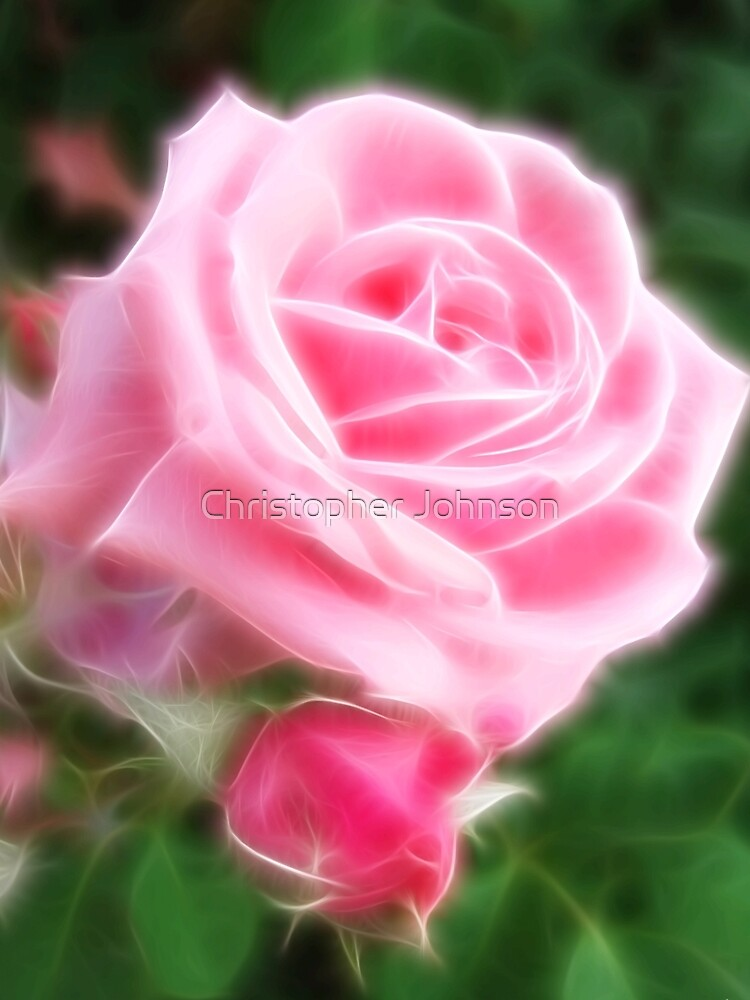 Pink Roses in Anzures 2 Angelic by TravelPhotoArt