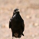 American Crow by Epicurian