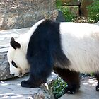 Giant Panda by Bailey Designs