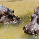Two Hippos by Bailey Designs