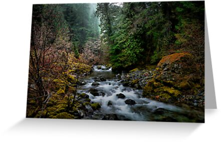 Beauty Is Where We Find It by Charles & Patricia   Harkins ~ Picture Oregon