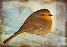 rescued robin by Teresa Pople