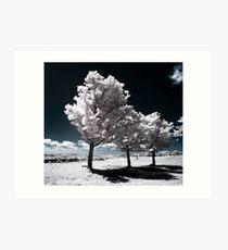 Seneca Trees Art Print