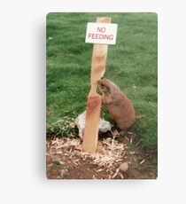 Clever Critter Metal Print