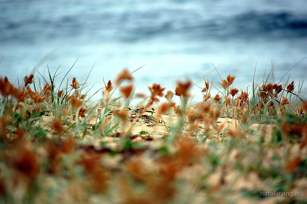 beach textures by natalie angus