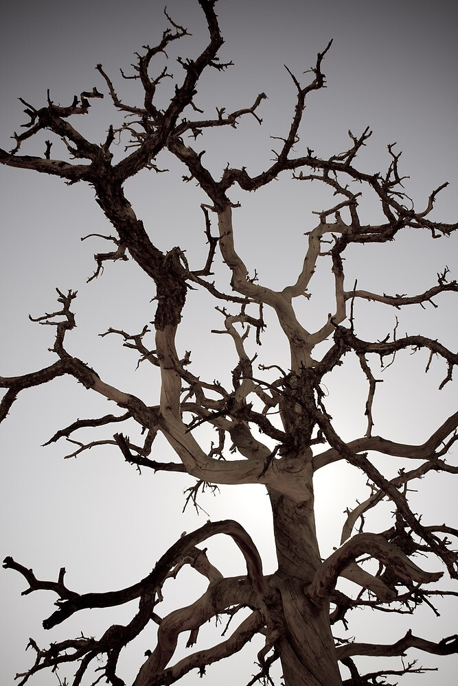 Tree of Gondor by Tenderhooligan