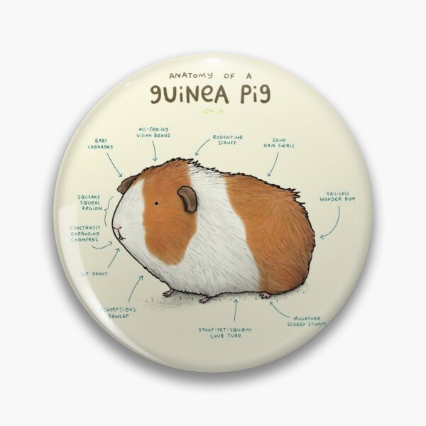 Anatomy of a Guinea Pig Pin