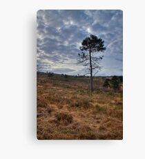 Sad and Gloomy Place Canvas Print