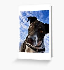 And Why Is That? Greeting Card