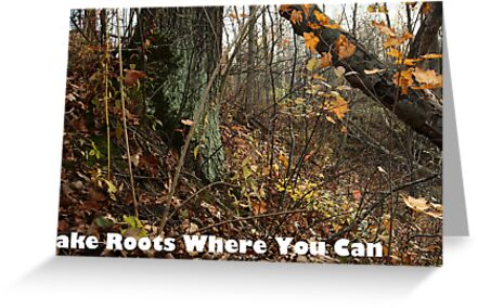 Take Roots Where You Can by Thomas Murphy