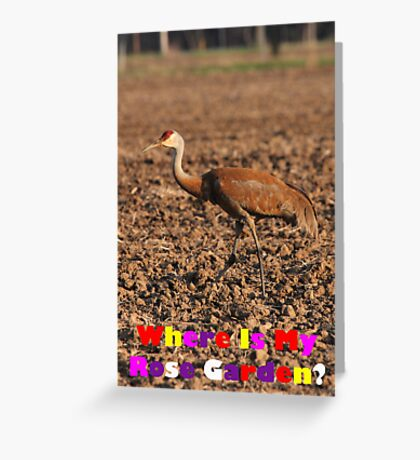 Where Is My Rose Garden? Greeting Card