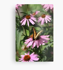Echinacea with Butterfly 8835 Metal Print