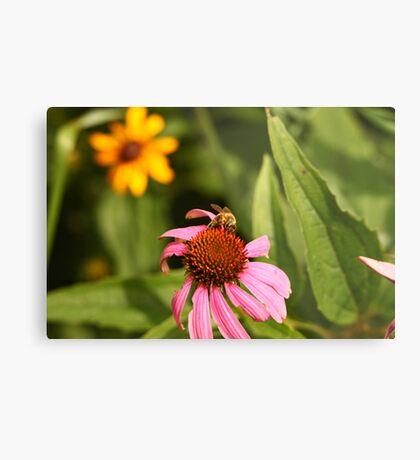 Echinacea with Bee 8670 Metal Print