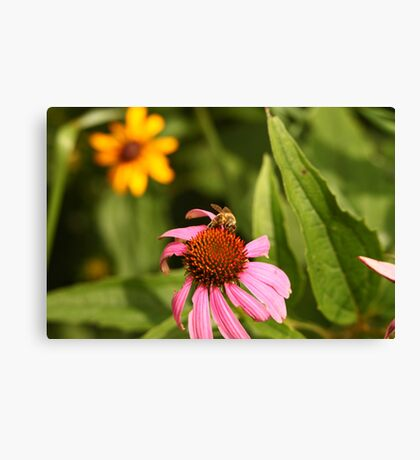 Echinacea with Bee 8670 Canvas Print