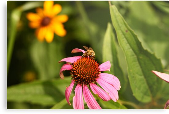Echinacea with Bee 8670 by Thomas Murphy
