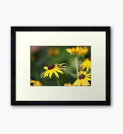 Black Eyed Susan with Beetle 8624 Framed Print