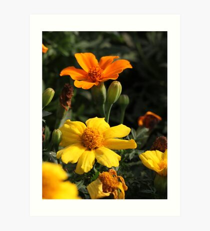 Flower 7130 Art Print