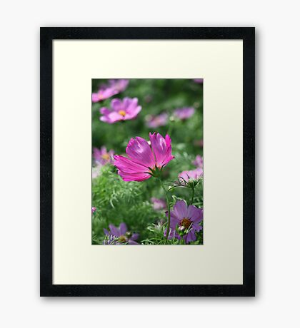 Flower 7142 Framed Print