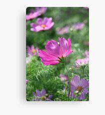 Flower 7142 Metal Print