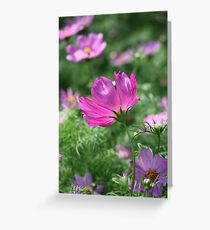 Flower 7142 Greeting Card