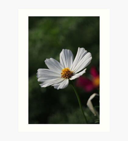 Flower 7156 Art Print