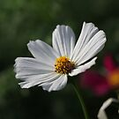 Flower 7156 by Thomas Murphy
