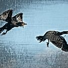 Cormorants in Retreat by toby snelgrove  IPA