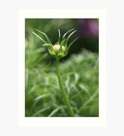 Flower 7163 Art Print