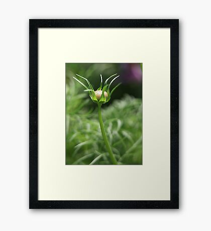 Flower 7163 Framed Print