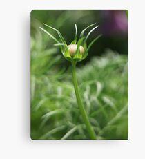 Flower 7163 Canvas Print