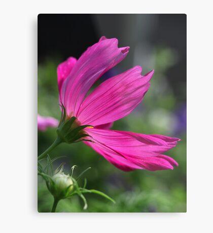 Cosmos Flower 7166 Metal Print