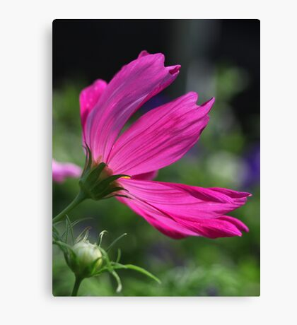 Cosmos Flower 7166 Canvas Print