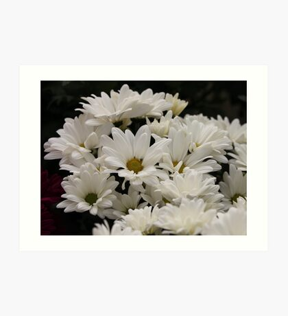 Daisy Flowers 7083 Art Print