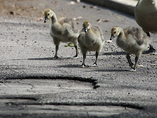 The Gosling Gang by Thomas Murphy