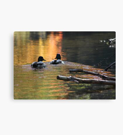 The Leading Ducks Canvas Print