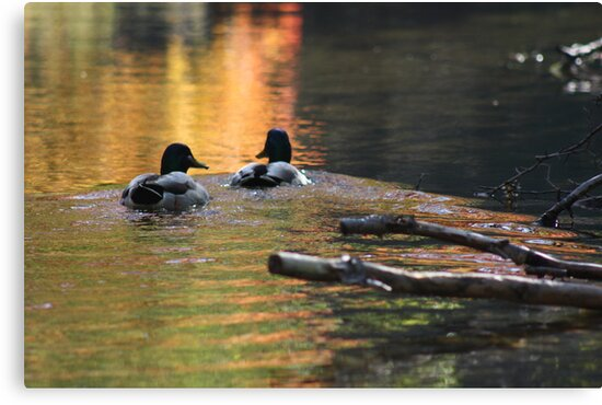 The Leading Ducks by Thomas Murphy