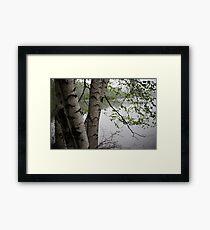 Birch Tree Waterscape 3229  Framed Print