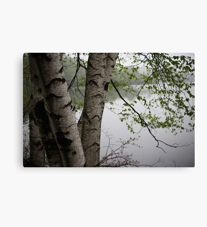 Birch Tree Waterscape 3229  Canvas Print