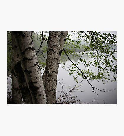 Birch Tree Waterscape 3229  Photographic Print