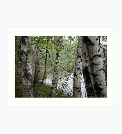 Birch Tree Waterscape 3228 Art Print