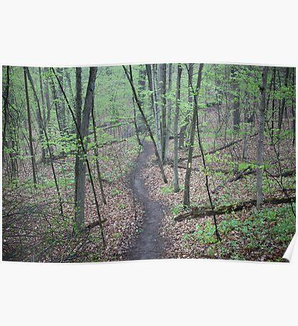Ravine Trail 3307 Poster