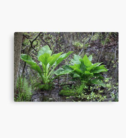 Ravine Trail Vegetation 3281 Canvas Print