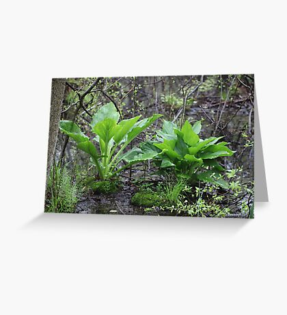 Ravine Trail Vegetation 3281 Greeting Card