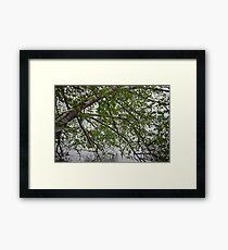 Birch Tree Waterscape 3129 Framed Print