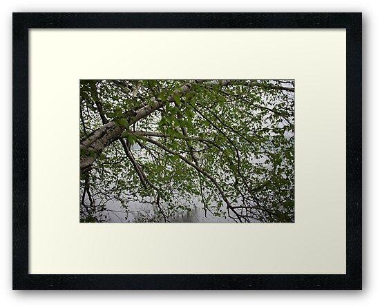 Birch Tree Waterscape 3129 by Thomas Murphy