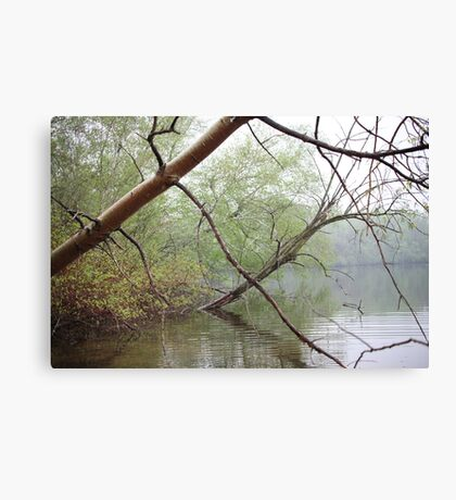 Birch Tree Waterscape 3203 Canvas Print