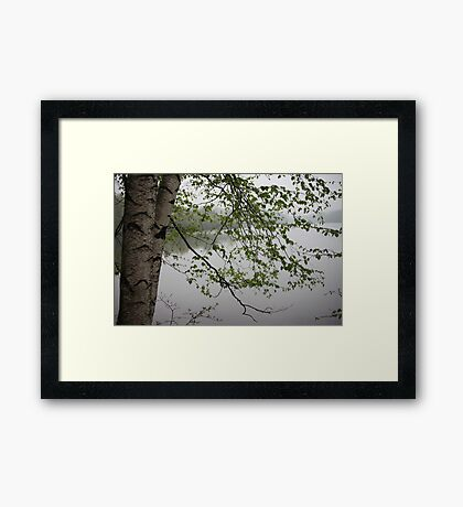 Birch Tree Waterscape 3235 Framed Print