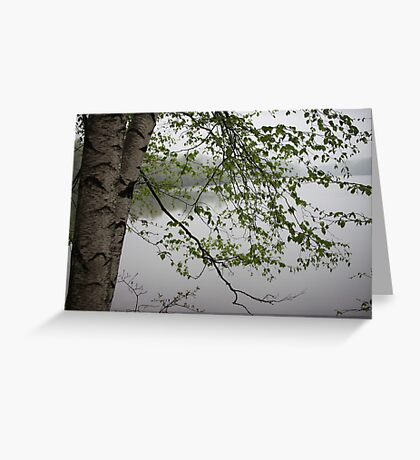 Birch Tree Waterscape 3235 Greeting Card